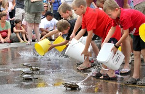 What you need to know about the Nisswa Turtle Races
