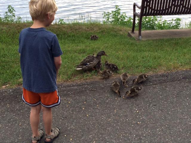 Feeding the ducks at Cragun's Resort