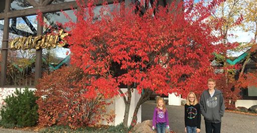 Minnesota Vacation Poll 1 – Cragun's Resort Fall 2016