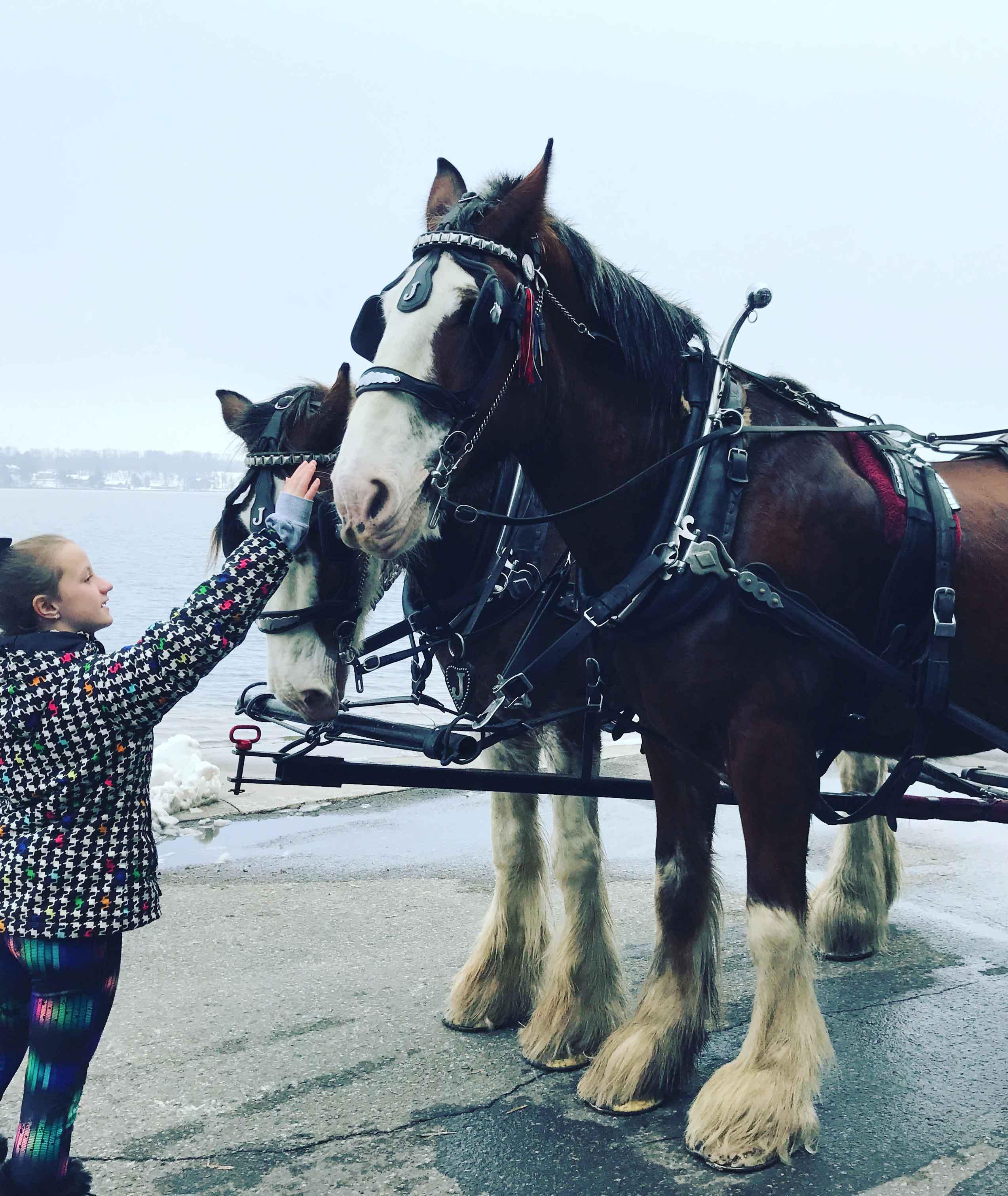 Making Memories at Cragun's Petting the Horses