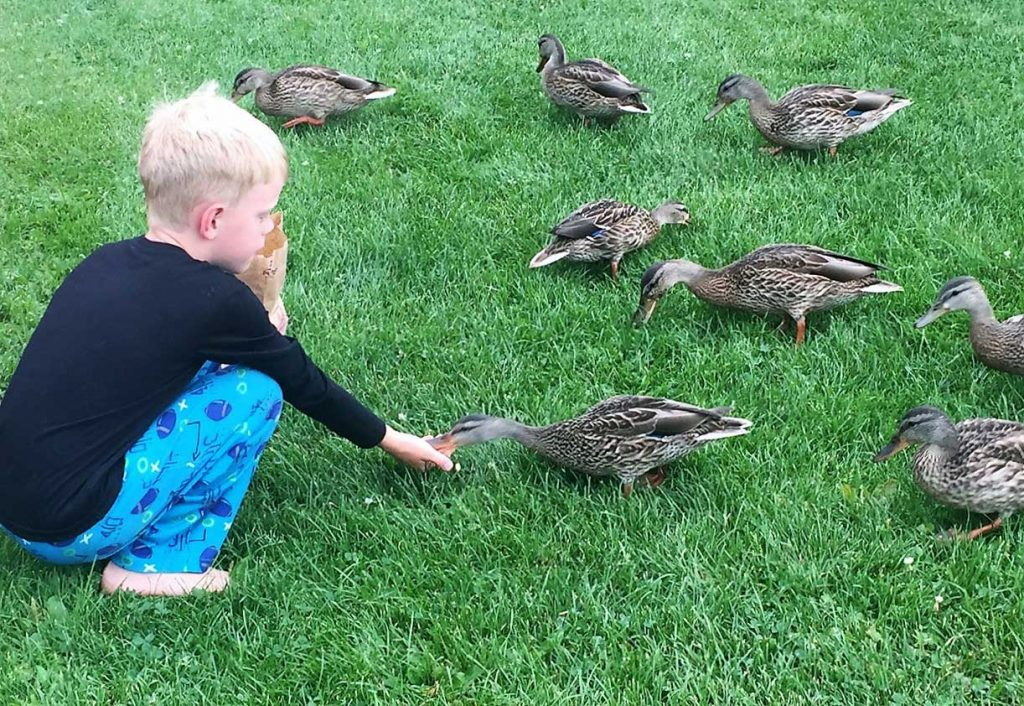 Feeding the ducks at Cragun's Resort