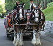 Horse drawn trolley rides